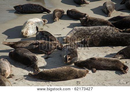 Sea Lions on Beach