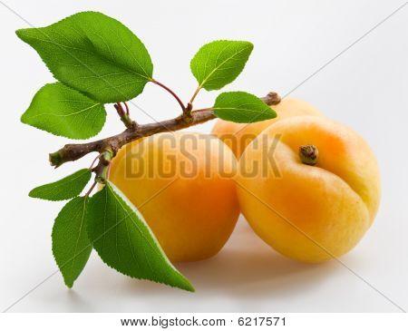 Apricot_13