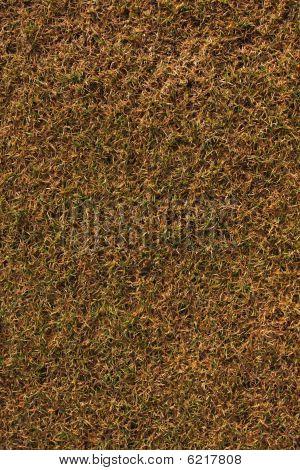 Antiguo fondo de hierba