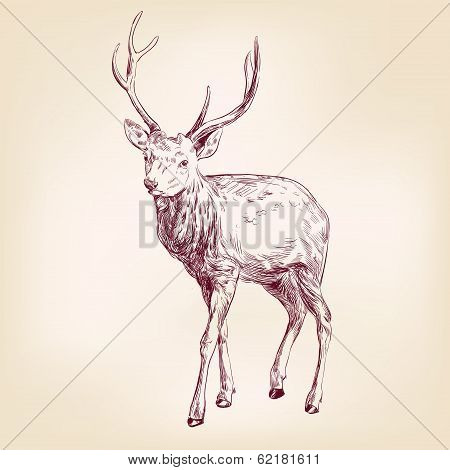 Deer hand drawn vector llustration realistic sketch