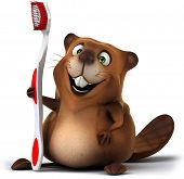 picture of muskrat  - Beaver - JPG