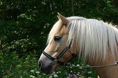 Horse Portrait With Flowers poster