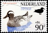 Garganey Stamp