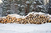 Timber On Snow In Winter Forest