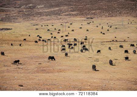Farmland In Shangri-la