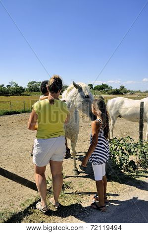 Tourists Who Discover Camargue Horses