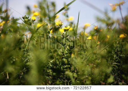 Spring Awakening In The Nature