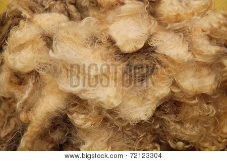 Sheep Fleece.