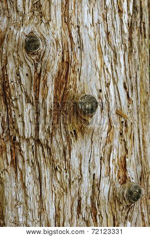 Wooden Grunge Fissured Background