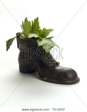 Old Clay boot with herbs inside