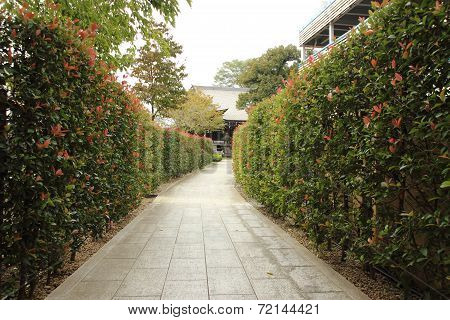 Pathway With Tree