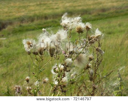 Wind swept plant