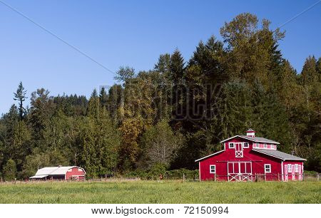 Red Barns In Summer