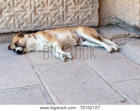 Sleeping dog in the Sultanhani caravansary on the Silk Road Turkey