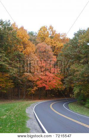 road curves through autumn leaves