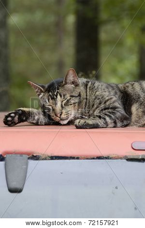 Cat Sleeping on a Truck Top in Missouri
