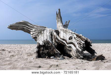 Beach Drift