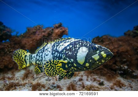 Exotic Fish Isolated In Aquarium