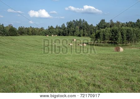 Lithuanian  Fields