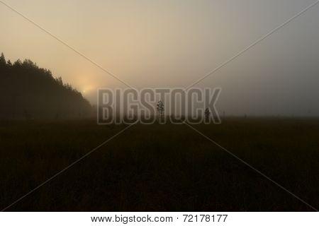 Sunrise In The Fog Of The Forest Hidden In The Swamp Marsh Mist
