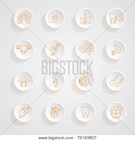 Vector Set Of Contour Of Internal Human  Icons Button Shadows  Vector Set