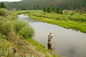 stock photo of brook trout  - A fisherman casting on a stream in Wyoming - JPG