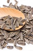 image of sunflower-seed  - A pile of sunflower seeds with wooden spoon - JPG
