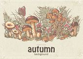 pic of chanterelle mushroom  - Image of autumn background with white mushrooms chanterelles and oyster mushrooms - JPG