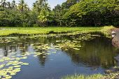 stock photo of sand lilies  - A view of the pond behind the Black Sand Beach in Punaluu - JPG