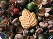 picture of beechnut  - One Canadian maple cream cookie - JPG
