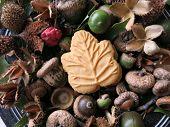 stock photo of beechnut  - One Canadian maple cream cookie - JPG