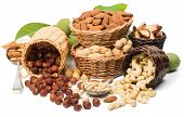 picture of brazil nut  - Variety nuts  - JPG