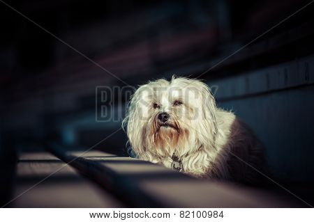 Dog In The Light