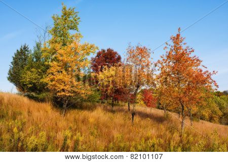 Colorful Scenic Landscape In Hdr In Soft Focus