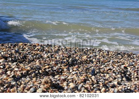 the beach, a bunch of shells