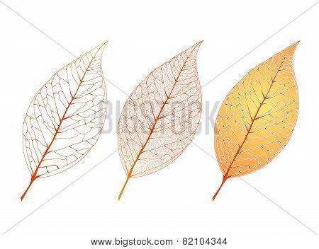 Decorative Leaf Set