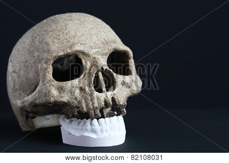Skull And Jaw
