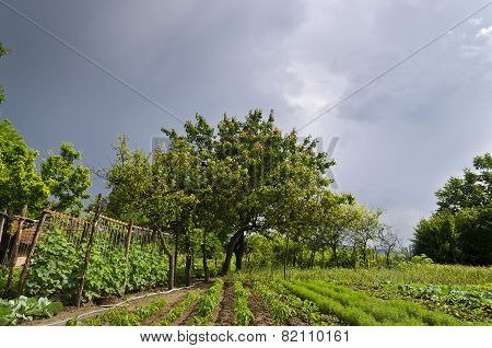 Growing Bio Vegetables In The Northern Bulgaria In The Summer