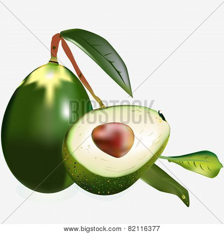 Two Avocados On A Branch