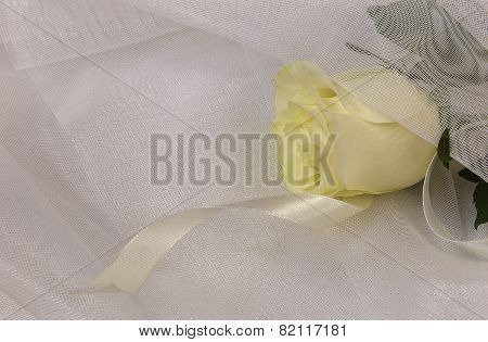 Beige Rose And Ribbon On A White Tulle