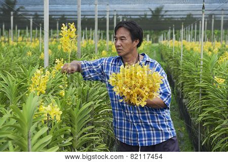 Man works at the orchid farm in Samut Songkram, Thailand.
