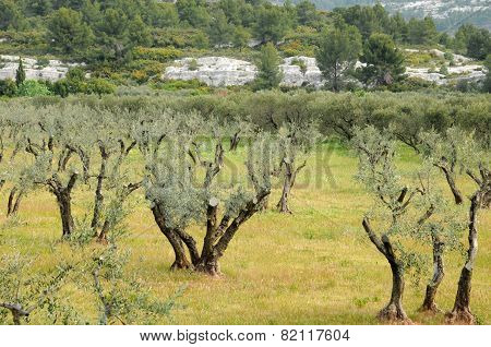 Typical Landscape Of Maussane Les Alpilles In Provence