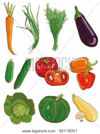 Vector Vegetables Set. Food Ingredients