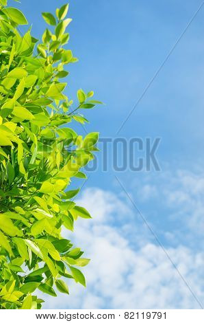 Background with a laurel tree