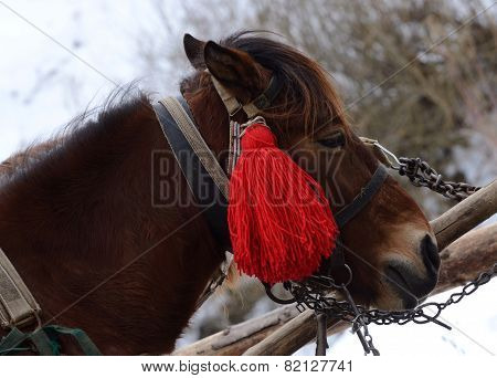 Portrait Of Horse With Red Pompon At Carpathian Mountain Village,western Ukraine