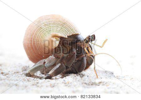 Hermit Crab on sand