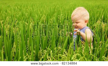 Little girl in the rice field