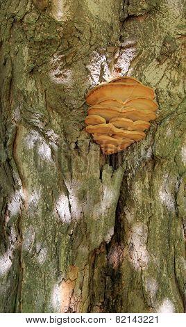 Detail of large mushroom on tree