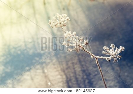 Snow On The Plants In Winter Forest