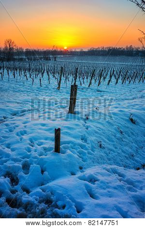 Sunset On Snowy Vineyard